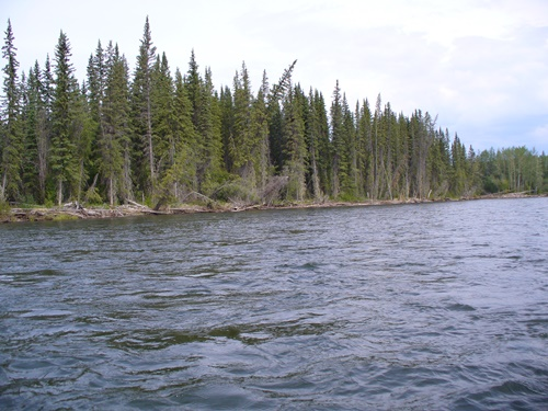 bystrá řeka lemovaná lesy