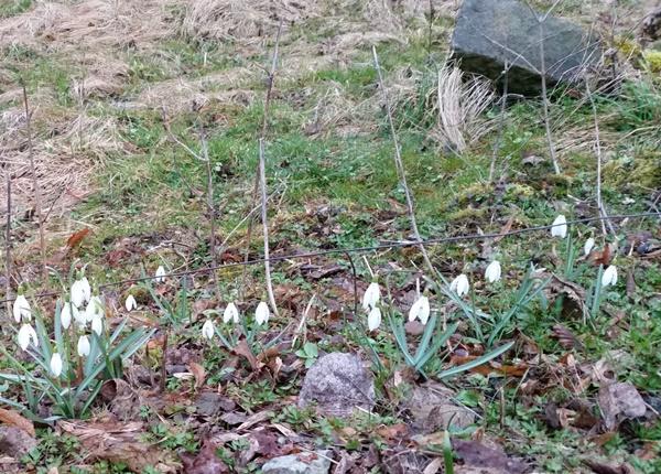 poslové jara a cesty
