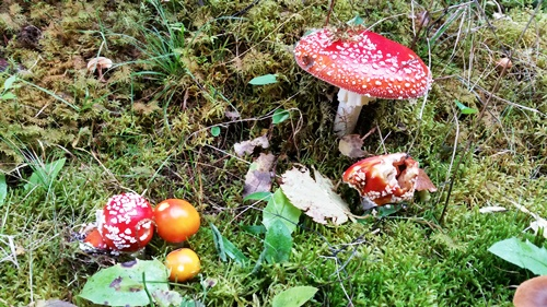 z Řepešína - houby - normální houbovej čaj